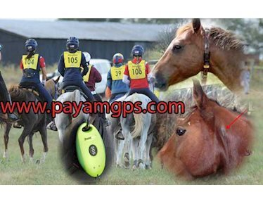 فناوری جی پی اس برای ردیابی کردن اسب