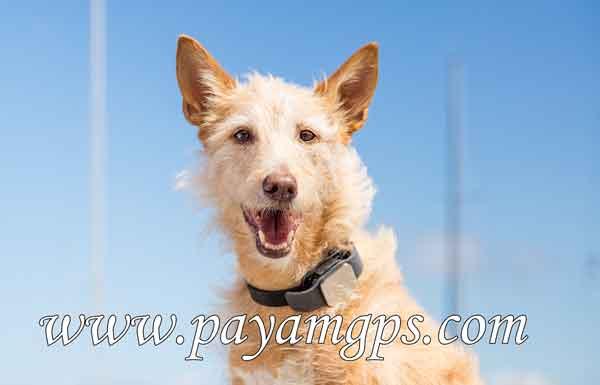 ردیاب جی پی اس برای حیوانات