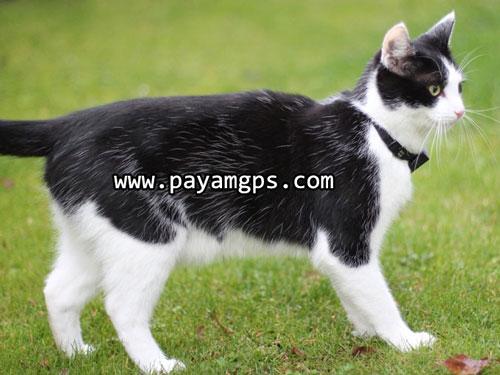 ردیاب جی پی اس GPCats بهترین ردیاب گربه