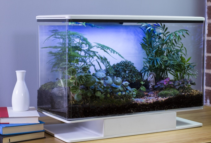 پرورش و رشد مناسب گل و گیاهان آپارتمانی با SmartTerra