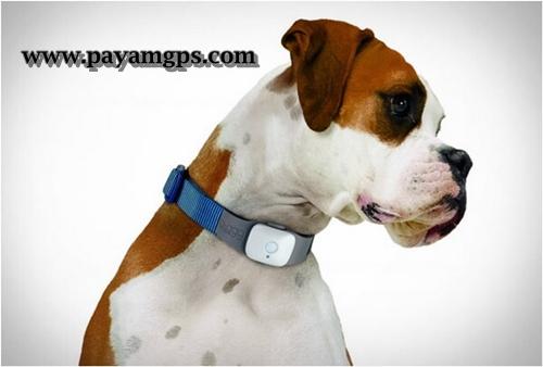 گیرنده GPS برای حیوانات خانگی