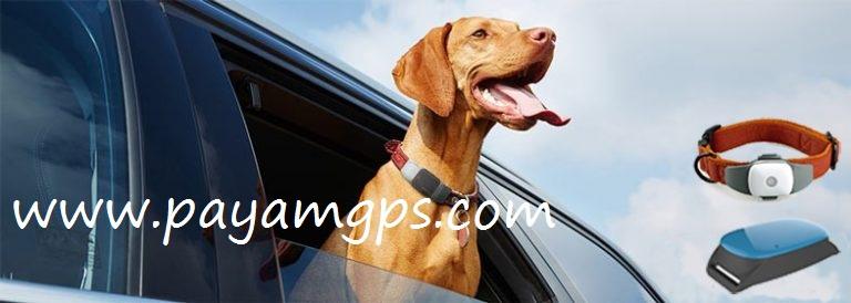 خصوصیاتی که ردیاب های GPS حیوانات خانگی باید داشته باشند